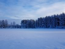 Winter scene in Hedmark county Norway. Blue Tone in the evening. The Trees are covered in snow royalty free stock images