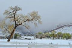 Winter Scene Royalty Free Stock Image