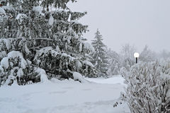 Winter Scene. With a lamppost and evergreen trees Stock Photography
