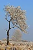 Winter scene, landscape. royalty free stock photo