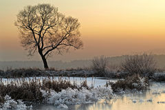 Winter scene, landscape. stock images