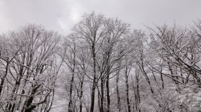 Winter scene of leafless trees Royalty Free Stock Image