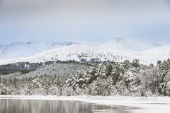 Winter scene at Loch Morlich in the Cairngorms National Park of Scotland. Winter on Loch Morlich in the Cairngorms National Park of Scotland Royalty Free Stock Images