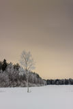 Winter Scene 1. A lonely birch tree completely frozen in the rural Finland stock photography