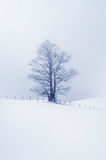 Winter scene with lonely tree Royalty Free Stock Images