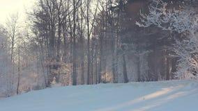 Winter scene. Morning sunlight in winter park. Sunrise in winter park stock footage