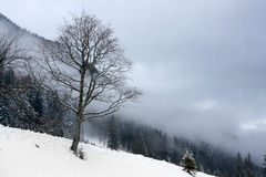 Winter scene in mountain forest Stock Photography