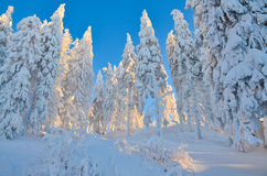 Winter scene on mountain Royalty Free Stock Image