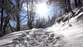 Winter scene on mountain trail stock video