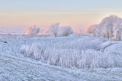 Winter scene in The Netherlands. During only a few days all of The Netherlands was covered in a thin layer of ice. This photograph was taken in The Biesbosch Royalty Free Stock Images