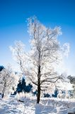 Winter scene from Norway. Snow covered tree in Winter scene from Norway Stock Images