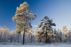 Winter scene from Norway Royalty Free Stock Images