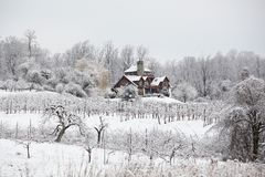 Winter Scene in Orchard Stock Photography