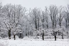 Winter Scene in Orchard stock images
