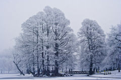 Winter scene in park. Winter scene of snow-covered trees in park Stock Photos