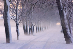 Winter Scene in Park Stock Photography