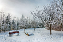 Winter scene in the park Royalty Free Stock Photos