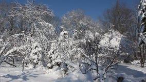 Winter scene in park stock video footage