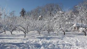 Winter scene in park stock video