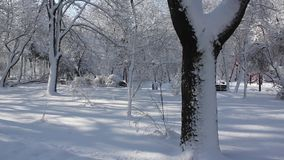 Winter scene in park. Snow covered trees in a sunny frosty day stock video