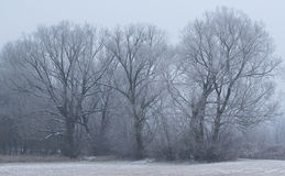 Winter scene in the park Stock Image