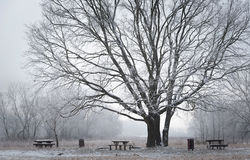 Winter scene in the park Royalty Free Stock Photography