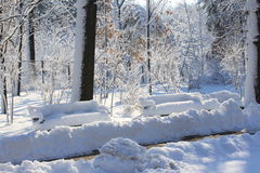 Winter scene in park. In a sunny day Royalty Free Stock Photography