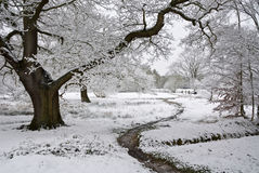 Winter scene of path and tree covered in Snow Royalty Free Stock Images