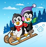 Winter scene with penguins sledging Stock Images