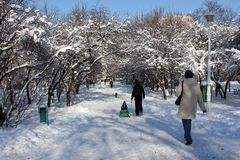Winter scene - people in the park Royalty Free Stock Photo