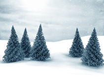 Winter scene. Pine trees and snow Royalty Free Stock Photography