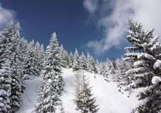 Winter scene. Pines trees, snow, blue sky, clouds Stock Photography