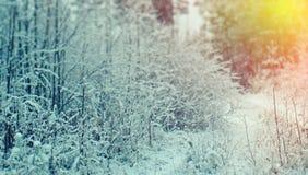 Winter scene Stock Image