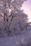 Winter scene in purple. Colors stock images