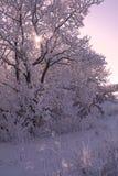 Winter scene in purple Stock Images