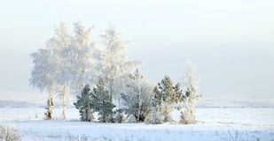 Winter scene in Russia Royalty Free Stock Image