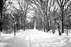 Winter scene Sapporo, Hokkaido, Japan. Winter scene with the tree a long road Stock Photos
