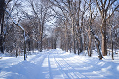 Winter scene Sapporo, Hokkaido, Japan. Winter scene at Hokkaido University during heavy snowing Royalty Free Stock Photo