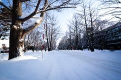Winter scene Sapporo, Hokkaido, Japan. Winter scene at Hokkaido University during heavy snowing Stock Photos