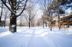 Winter scene Sapporo, Hokkaido, Japan. Winter scene at Hokkaido University during heavy snowing Royalty Free Stock Image