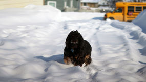 Winter Scene. This winter scene showcases a dog in the snow Royalty Free Stock Photo