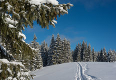 Winter scene with ski-track Royalty Free Stock Photography