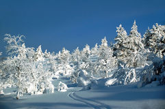 Winter scene with a skiing track, Lapland Finland Stock Image