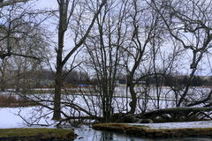 The winter scene. A small pond in winter with ice and snow Royalty Free Stock Images