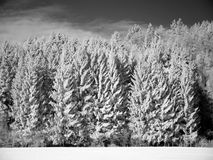 Winter Scene of snow covered forest Royalty Free Stock Photography