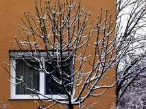 Snow Covered Tree Branches in Front of Beige Building stock image