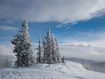 Snow covered trees near Monarch Pass, Colorado. This is a winter scene with snow covered trees near Monarch pass, Colorado with room for text and for a logo royalty free stock photo