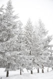 Winter Scene with Snow Covered Trees Stock Photos
