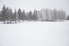 Winter Scene with Snow Covered Trees Royalty Free Stock Photos