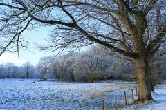 Winter scene, countryside, with snow in Drenthe, Netherlands. Meadow and trees with snow in countryside, Havelte, Drenthe in the Netherlands Stock Photography